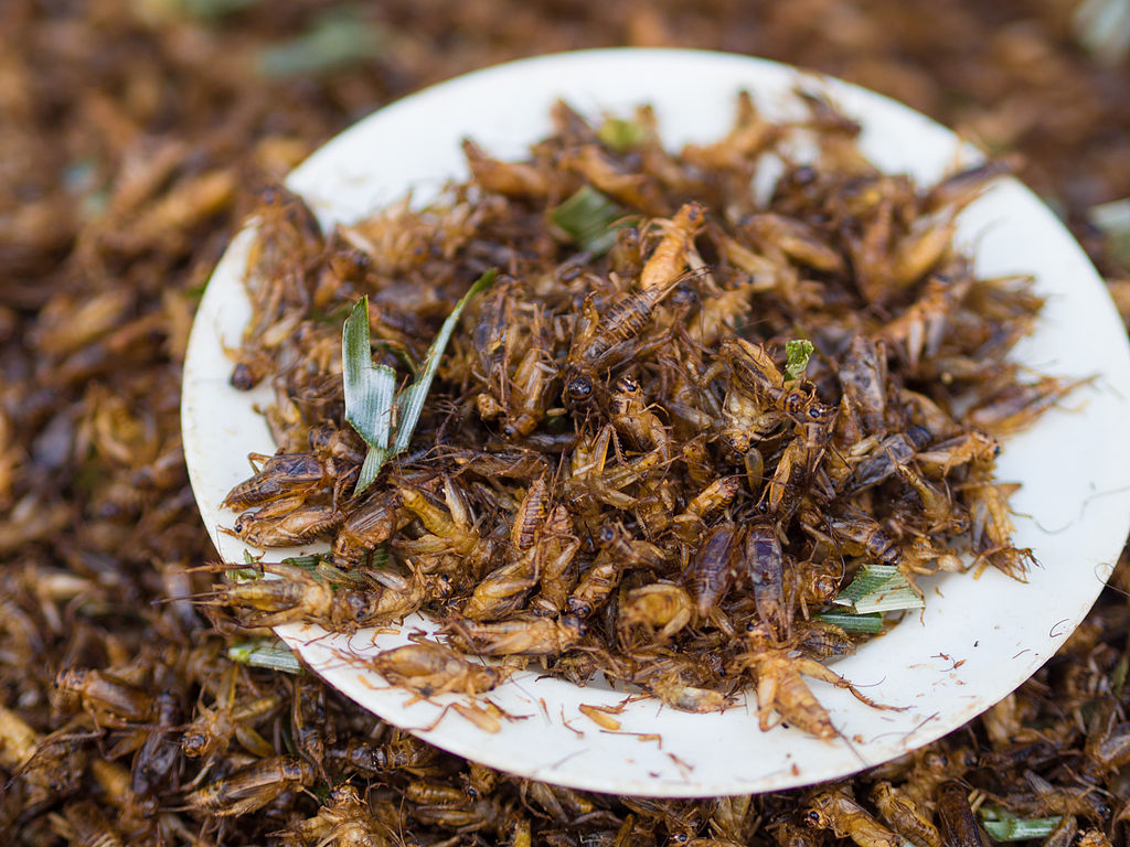 fried crickets entomophagy eating bugs illinois science council blog