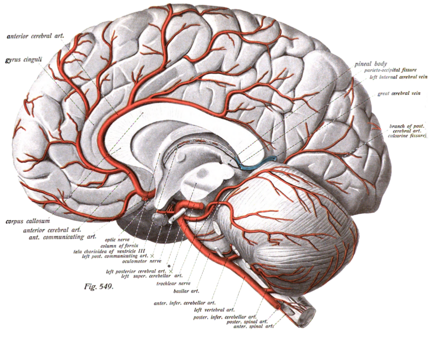 how brain recovers after stroke illinois science blog